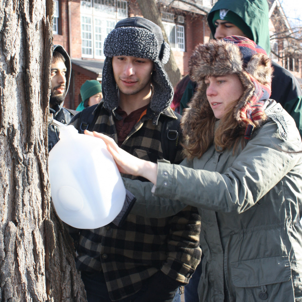 students collecting maple syrup from tree