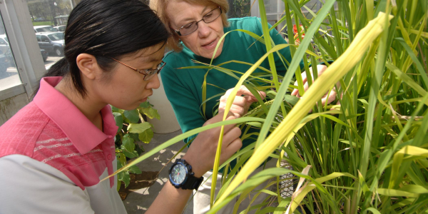 two women looking at plant samples